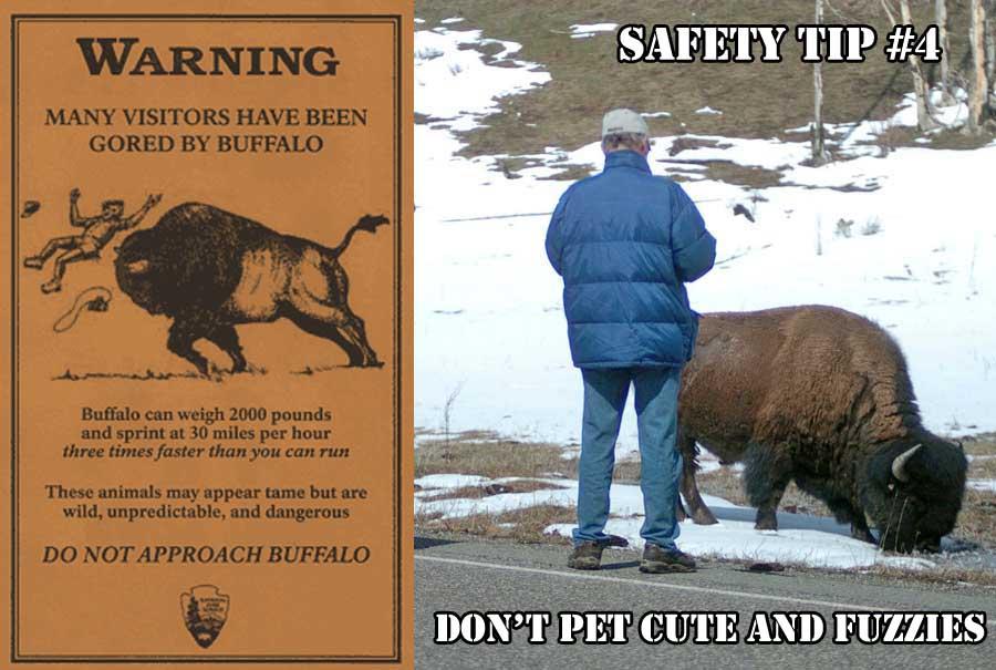 Don't Pet Wild Animals