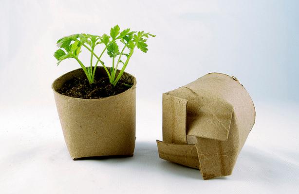 Toilet paper tube seedlings