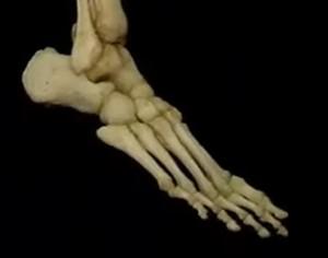 pic of foot bones